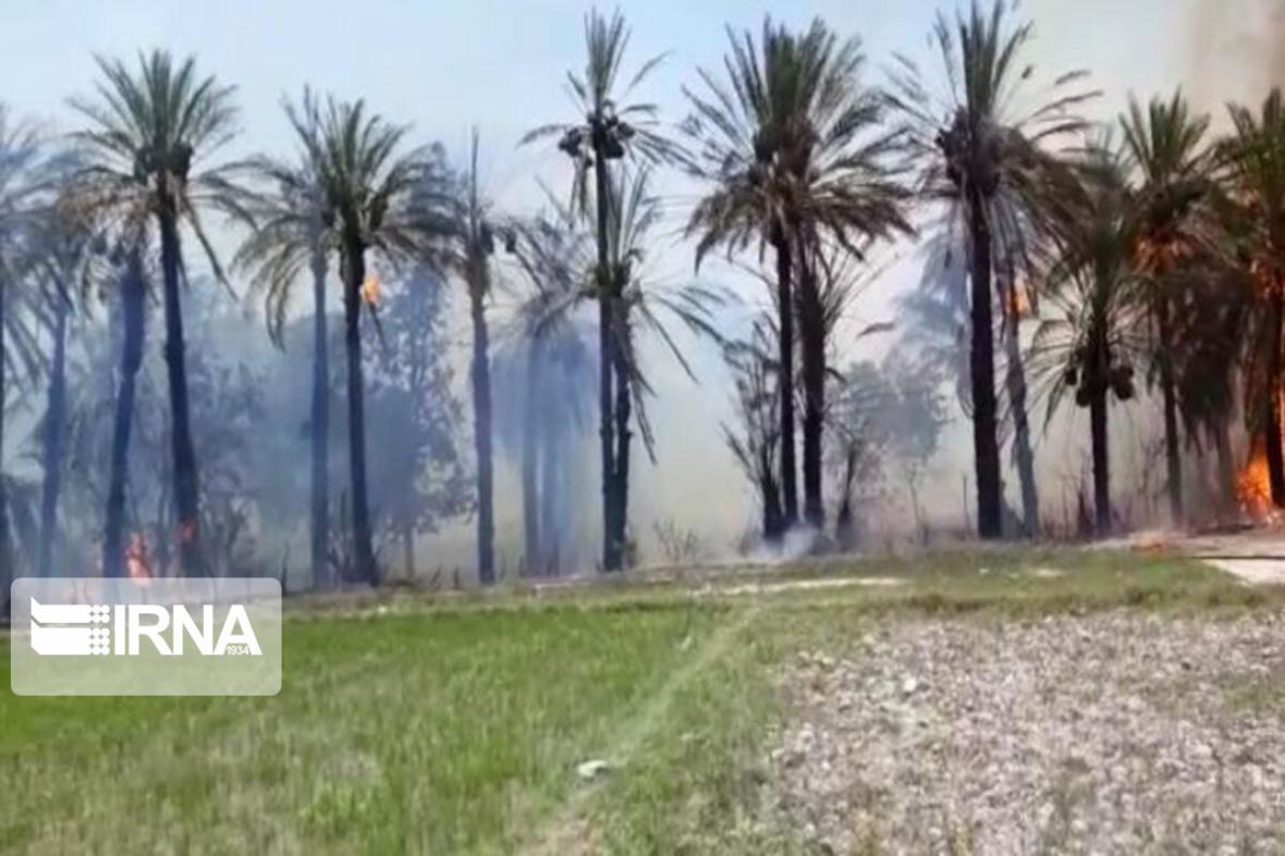 خبرنگاران 200 اصله درخت خرما در ریگان طعمه حریق شد